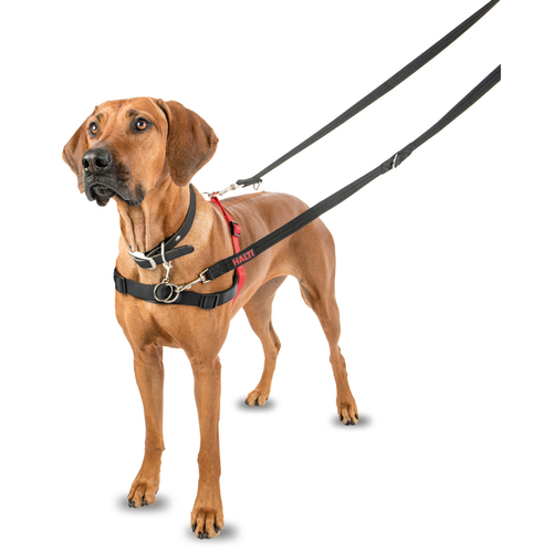 Control Dog Harness Reviews