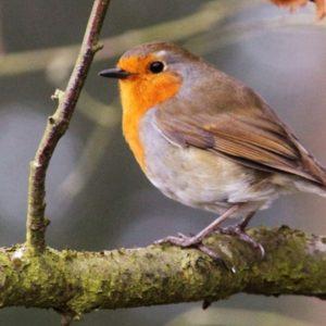 Wild Bird Food & Feeders