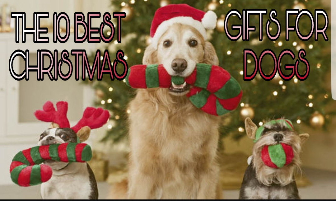 10 Best Christmas Gifts for Dogs - Fetch Your Pet Needs