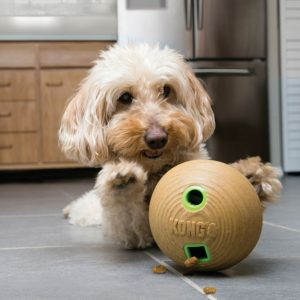 Dog Playing with Kong Feeder Bamboo Dumbbell